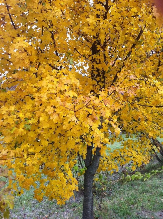 Autunno - Foliage
