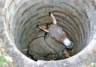 L'asino nel pozzo
