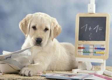Cane - cani - studente