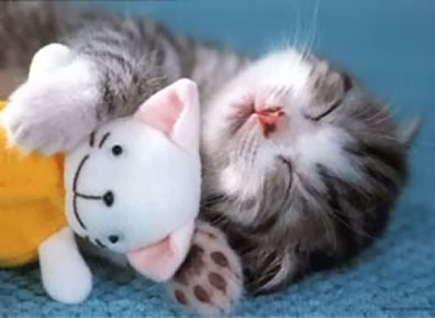 coccole gatto