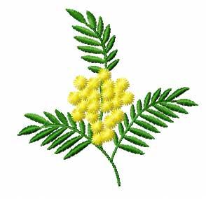 Mimosa - Mimose