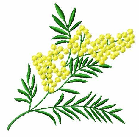 Mimosa - Mimose - Festa della donna - 8 marzo